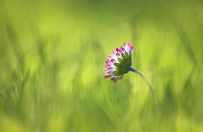 Evening In The Grass Original by Bronislava Vrbanova
