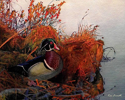 Wood Duck Painting - Evening Light Wood Duck by Ken Everett