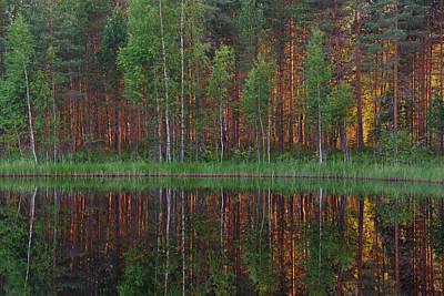 Forest Photograph - Evening Pond by Ari Salmela