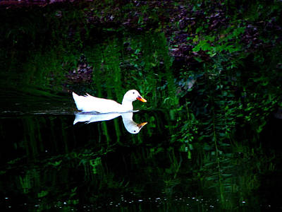Photograph - Evening Swim by Greg Simmons