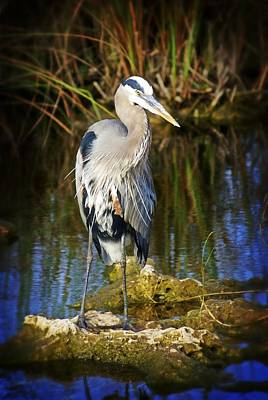 Photograph - Everglades Blue by Marty Koch