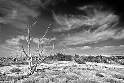 Blue Mudstone Print featuring the photograph Everglades Coastal Prairies Bw by Rudy Umans