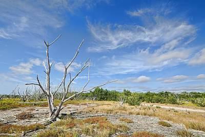 Blue Mudstone Print featuring the photograph Everglades Coastal Prairies by Rudy Umans