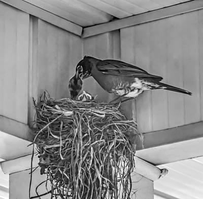 Bird And Worm Photograph - Every Spring by Steve Harrington