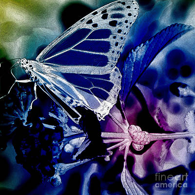 Abstract Image Of A Butterfly Photograph - Everyday Abstract 51 by Nancy E Stein
