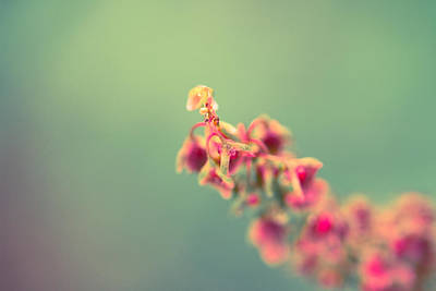 Nature Abstract Photograph - Exhale by Shane Holsclaw