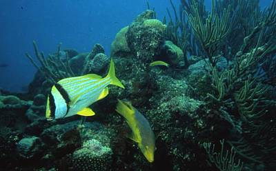Exotic Fish Print by Retro Images Archive