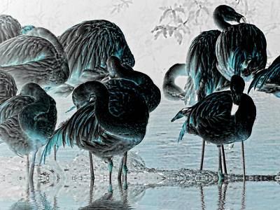 Stork Digital Art - Exotic Flamingos by Sharon Lisa Clarke