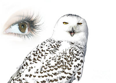 Eye Of Purity And The Mysterious Snowy Owl  Print by Inspired Nature Photography Fine Art Photography
