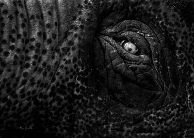 Eye Of The Elephant Print by Bob Orsillo