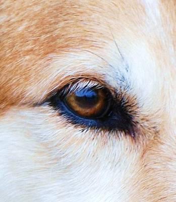 Eye Of The Hound Print by Lisa  DiFruscio