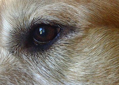 Dogs Photograph - Eye See You by Lisa Phillips