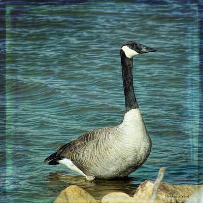 Waterfowl Mixed Media - Eye To Eye Canada Goose by Bellesouth Studio