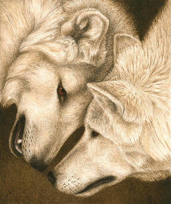 Wolf Watercolor Painting - Eye To Eye by Pat Erickson