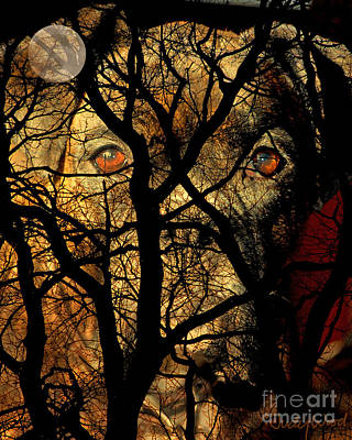 Eyes In The Sky Print by Judy Wood