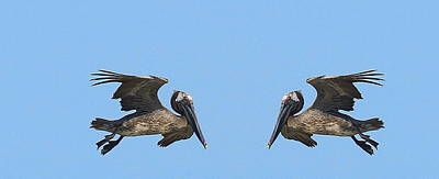 Genus Photograph - Face To Face Pelicans by Cathy Lindsey