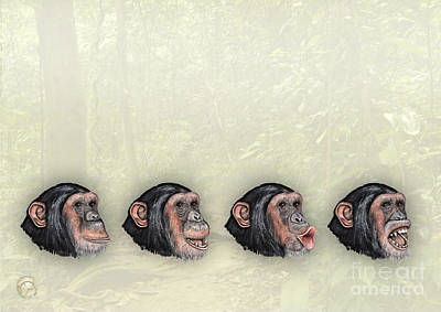 Chimpanzee Drawing - Facial Expressions Of Chimpanzees Pan Troglodytes - Zoo Interpretive Panel - Mimik Schimpansen by Urft Valley Art