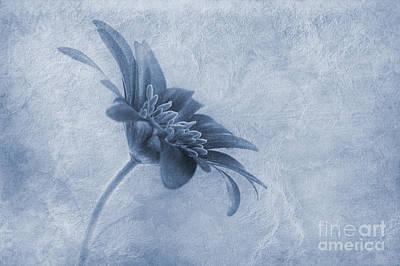 Faded Beauty Cyanotype Print by John Edwards