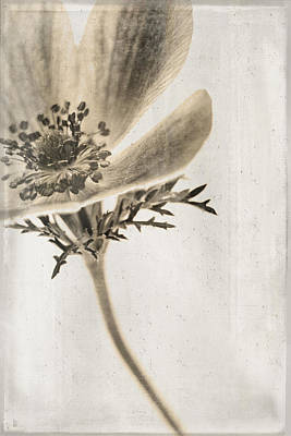 Sepia Flowers Photograph - Faded Memory by Caitlyn  Grasso