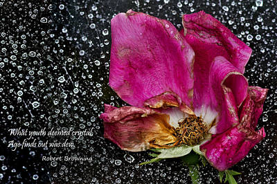 Faded Rose - Youth And Age Print by Nikolyn McDonald
