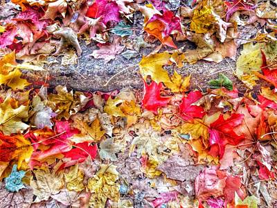 Fading Dream Photograph - Fallen Hues by Marianna Mills