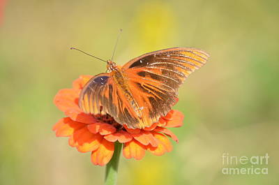 Fading Dream Photograph - Fading  Orange by Kathy Gibbons