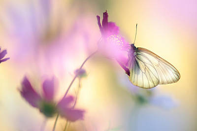 Flower Pink Fairy Child Photograph - Fairy Light by Jenny Rainbow
