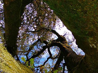 All Around Us Photograph - Fairy Tail Tree by Olga Ilyin