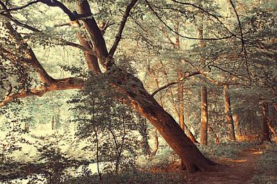 Fairy Woods Print by Jenny Rainbow