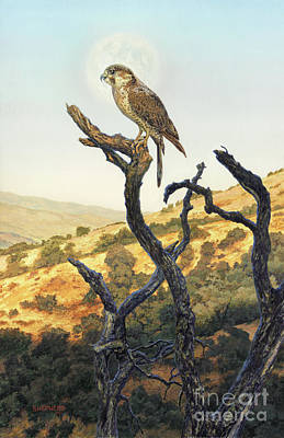 Raptor Painting - Falcon In The Sunset by Stu Shepherd