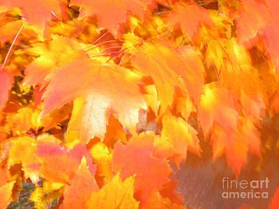 Brown Toned Photograph - Fall 1 by Tony Cordoza