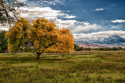 Bishops Photograph - Fall And Winter by Cat Connor
