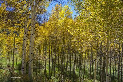 Fall Aspen At The Maroon Bells Colorado Original by Sam Sherman