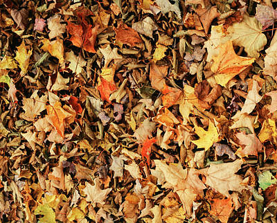 Large Group Of Objects Photograph - Fall Autumn Leaves (large Format Sizes by Walter Bibikow