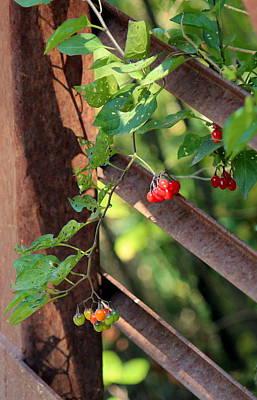 fall berries #6 Nightshade Print by Gina Gahagan