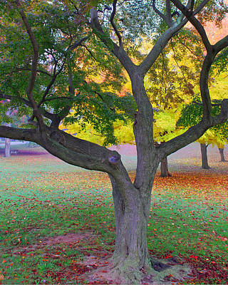 Fall Photograph - Fall Color by Lisa Phillips