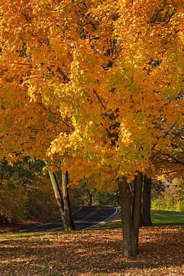 Fall Colors Print by Adam Romanowicz