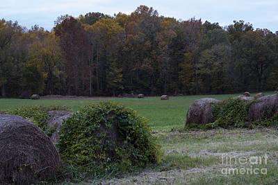 Murray Kentucky Photograph - Fall Colors by Amber Kresge