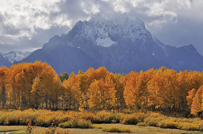 Fall Colors In Grand Teton National Park Print by Kriss Russell