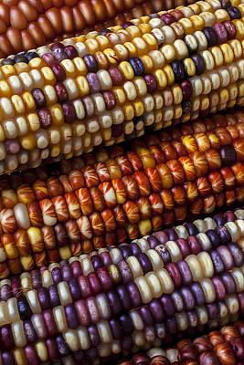 Fall Corn Print by Garry Gay