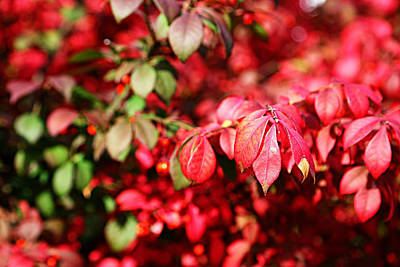 Fall Foliage Colors 10 Print by Metro DC Photography