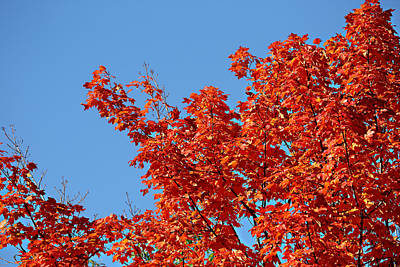 Landscape Photograph - Fall Foliage Colors 20 by Metro DC Photography