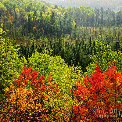 November Photograph - Fall Forest Rain Storm by Elena Elisseeva