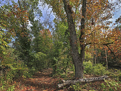 Ozarks Photograph - Fall Forest Trail Ozark-saint Francis by Tim Fitzharris