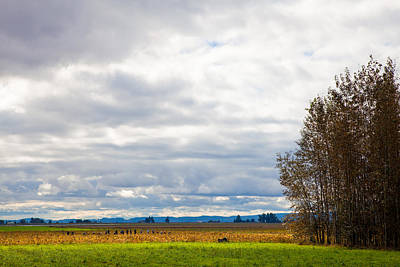 Barn Photograph - Fall Harvest In Mount Vernon Washington by David Patterson