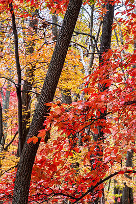 Fall In The Forest Print by John Haldane