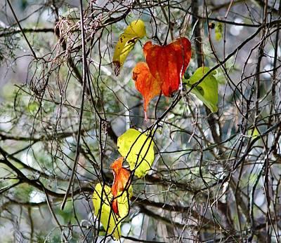 Fall Leaves Print by Cynthia Guinn