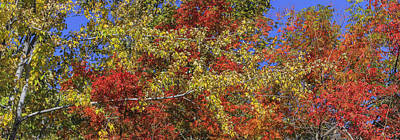 Fall Leaves In So Cal Print by Scott Campbell