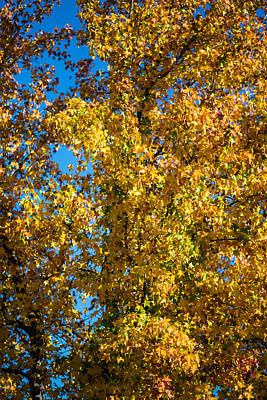 Fall Leaves Print by Mike Lee