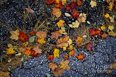 Fall Leaves On Pavement Print by Elena Elisseeva
